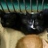 幼い仔猫たちが収容されています