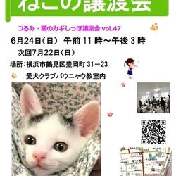 横浜 つるみ・猫のカギしっぽ譲渡会vol.47  JR鶴見駅歩5分室内