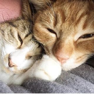 兄弟猫 2016年生まれ