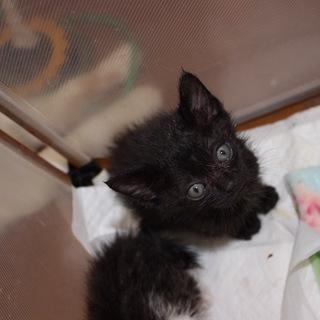 かわいい黒猫ことりちゃん離乳中