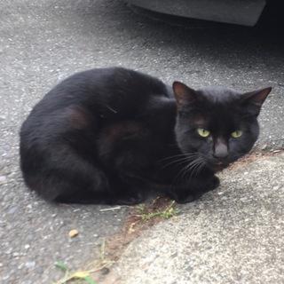 人懐こい黒猫です。