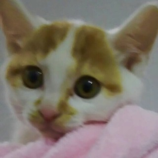 ☆生後約1.5か月・美猫ちゃん☆