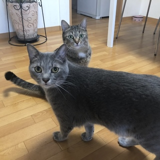 とても懐っこい兄妹猫ちゃん☆