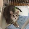[トライアル中]飼い主入院で置き去りにされた猫達 サムネイル5