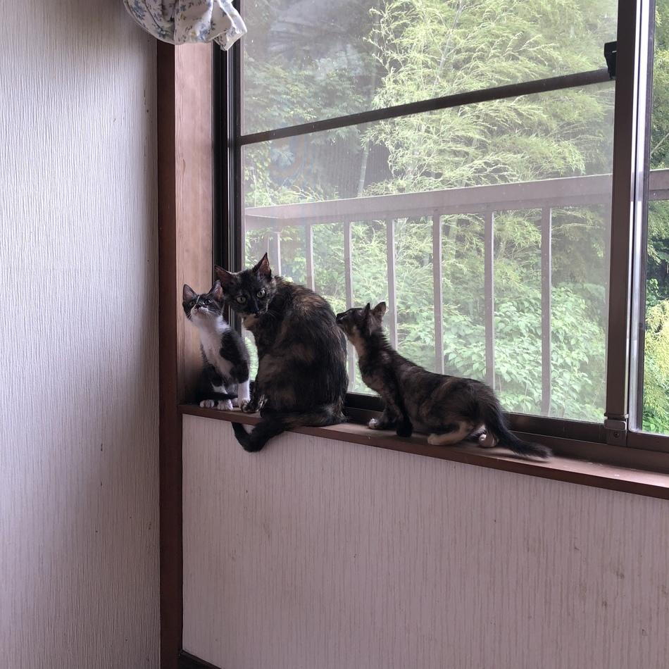 保護猫「いそべ君」のカバー写真