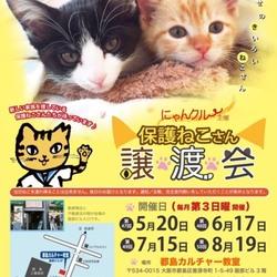 6月17日(日)第48回にゃんクルー譲渡会in大阪市都島6