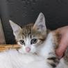 可愛いたれ目の三毛ちゃん♥️ サムネイル3