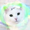 1歳♡初心者向け美少年!丸顔丸い目の白猫ポチ