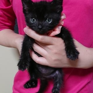人懐っこく元気でかわいい黒猫★マーニー★愛嬌ある子