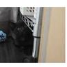 1ヶ月の黒猫兄弟です。