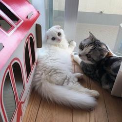 先住猫との接し方について