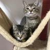◆◆ 6月23日 (土) 【春日井市】 ◆◆ねこの手の会 猫の譲渡会