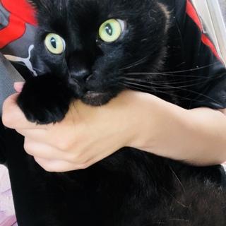 癒し系☆黒猫