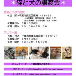 第48回 にゃん☆ぴーす犬猫譲渡会 in  千葉市