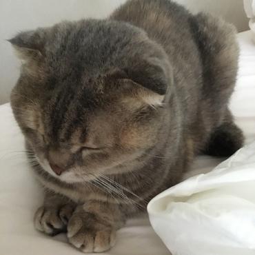かしこまって寝てます(o^^o)