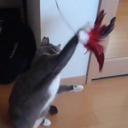 みかんちゃん猫パンチ炸裂!!