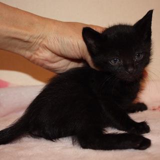 人懐こい元気な黒猫 あるじゃーの君