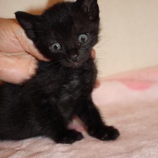 人懐こい可愛い黒猫 ぱるみじゃーの君