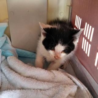 親猫が子猫を助けてと連れてきた子猫 保健所行き間近