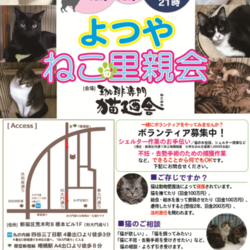 6月23日(土) 地域猫から社会猫へ FIPフリー 四谷猫廼舎 里親会(ボランティア募集中)