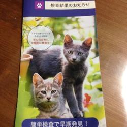 猫おじさんの地道な活動。