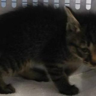 可愛い子猫が収容されました。収容期限6/21朝