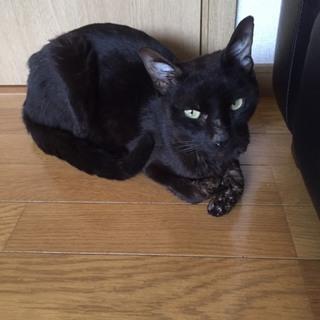 カッコよくてクールな黒猫