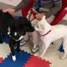ふれあい犬卒業のボーダーコリーミックス犬 サムネイル3