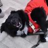 ふれあい犬卒業のボーダーコリーミックス犬 サムネイル5