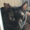 黒猫・目が金色・イケメンスラッとボーイ生後約1才♪ サムネイル2