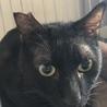 黒猫・目が金色・イケメンスラッとボーイ生後約1才♪ サムネイル4