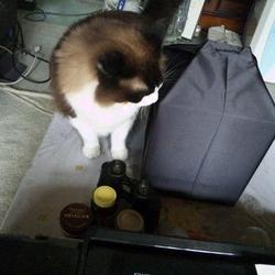 「猫なりの最後のご挨拶」サムネイル2