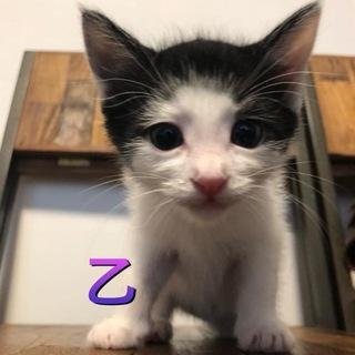 純日本猫?