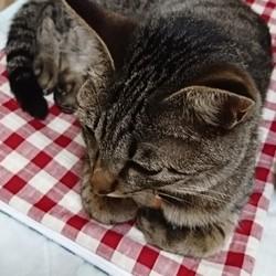 猫の一時預りについて