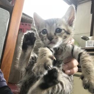 元気な可愛い子猫です(*^^*)