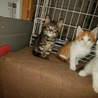 子猫4兄弟の家族を探しています。 サムネイル2