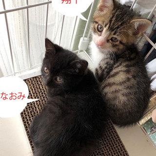 黒猫「なおみ」べったり甘えんぼうGIRL!