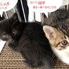 黒猫「なおみ」べったり甘えんぼうGIRL! サムネイル2