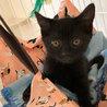 黒猫「なおみ」べったり甘えんぼうGIRL! サムネイル4