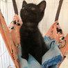 黒猫「なおみ」べったり甘えんぼうGIRL! サムネイル5