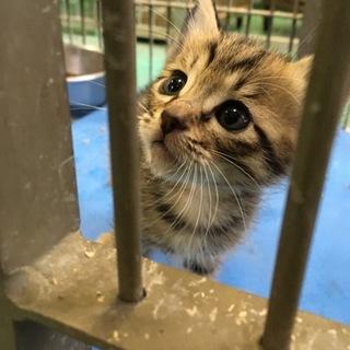 小さな仔猫が一匹だけで収容されました