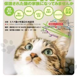 【時間変更16時~】ネスタ猫の里親会@西荻窪