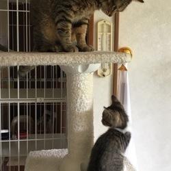 「子猫ちゃん参上から一週間」サムネイル1