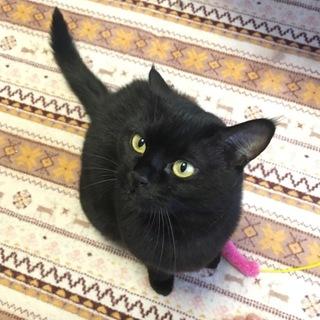 甘えん坊の可愛い猫です