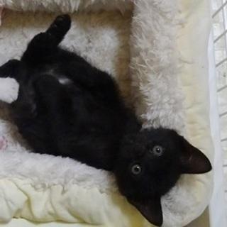 可愛いしぐさがたまらない小さな黒猫ちゃん