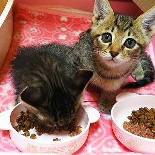 淡路島の猫に会いにきませんか?