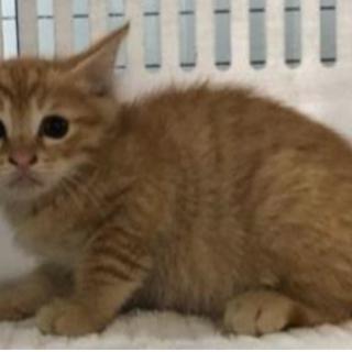現在センターには18匹の子猫が収容されています。