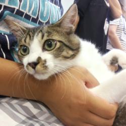 猫の譲渡会 名古屋市西区 みなと猫の会