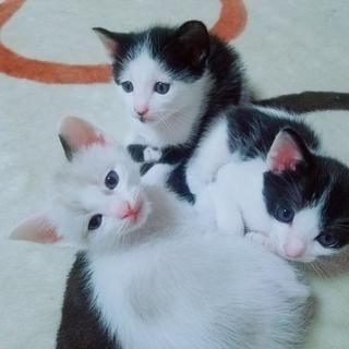 瞳がブルーの子猫4匹。