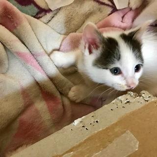 白黒の子猫ちゃん、ウーリー君